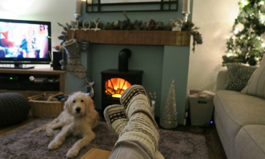cosy night in goldendoodle
