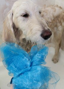 Grooming routine using the FURminator and muddy dog walks