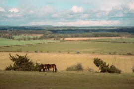 Family walks. Here is a great family walking in hampshire. Danebury Iron Age Hill Fort is a great walk with kids. The can climb up and down the ramparts but it's a nice short circular walk