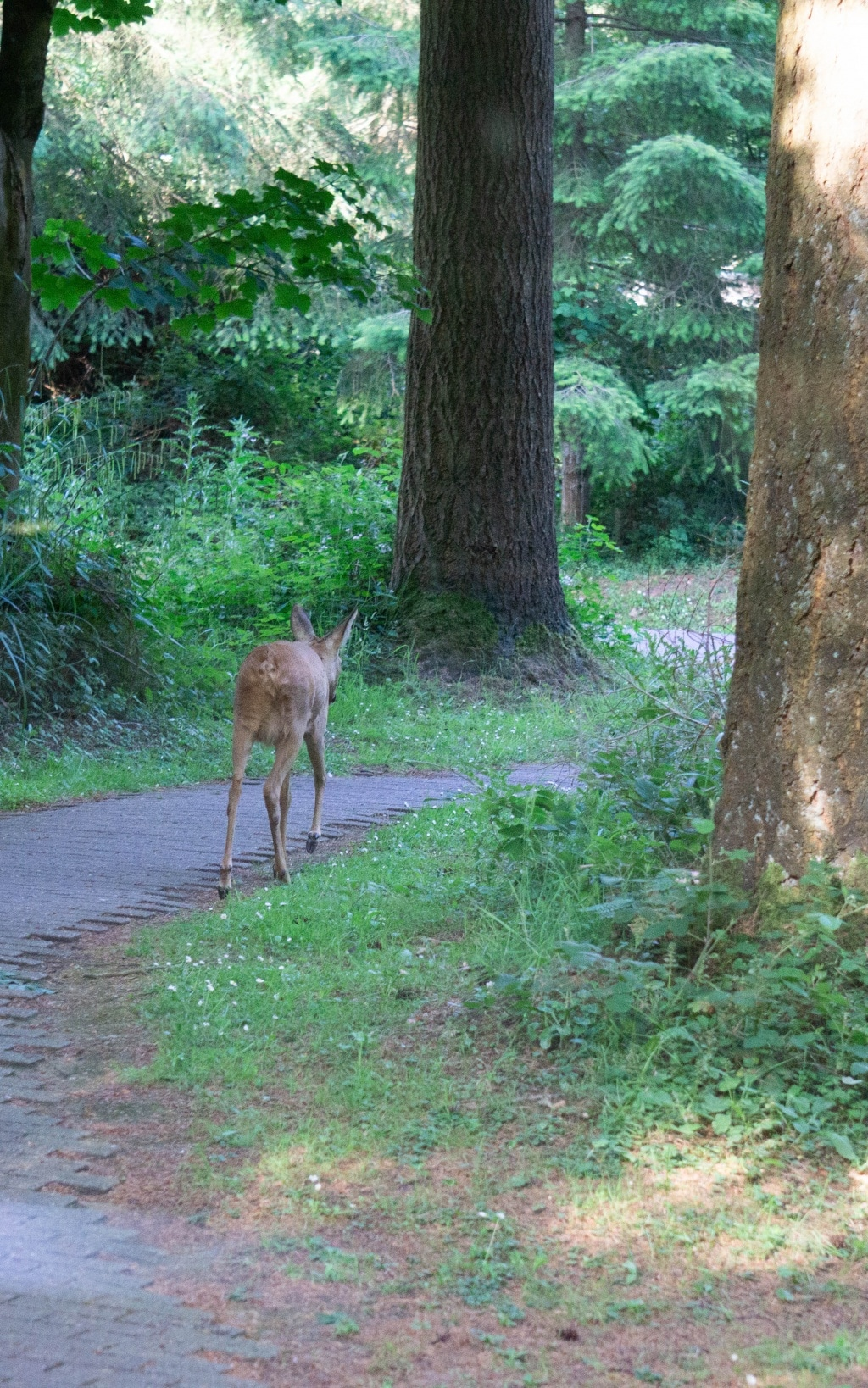 Center Parcs Longleat deer